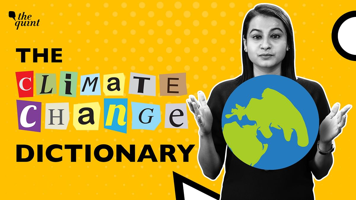 """<div class=""""paragraphs""""><p>'The Climate Change Dictionary' is all about the buzzwords of climate change, and carbon-net zero is the buzziest!</p></div>"""