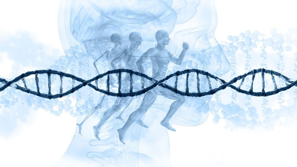 The age-related loss of intestinal stem cell function can be reversed by a 24-hour fast.