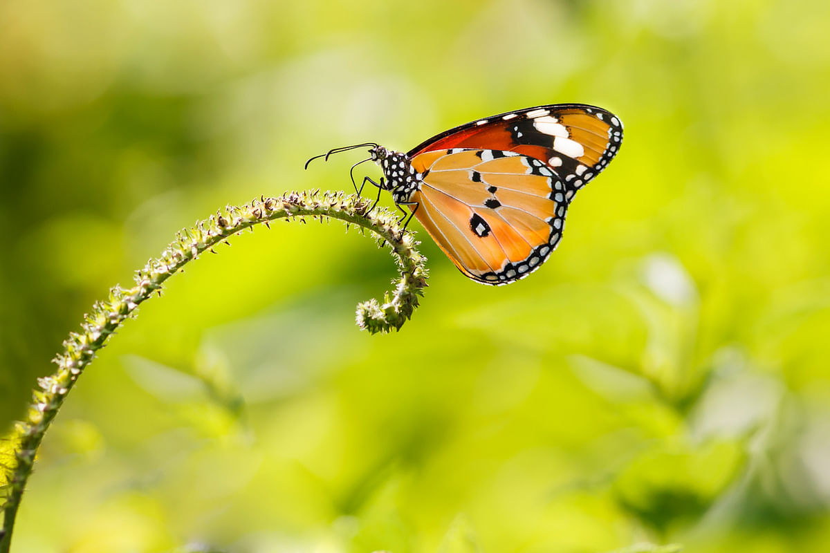 'I had never met or heard of anyone  with butterfly phobia.'