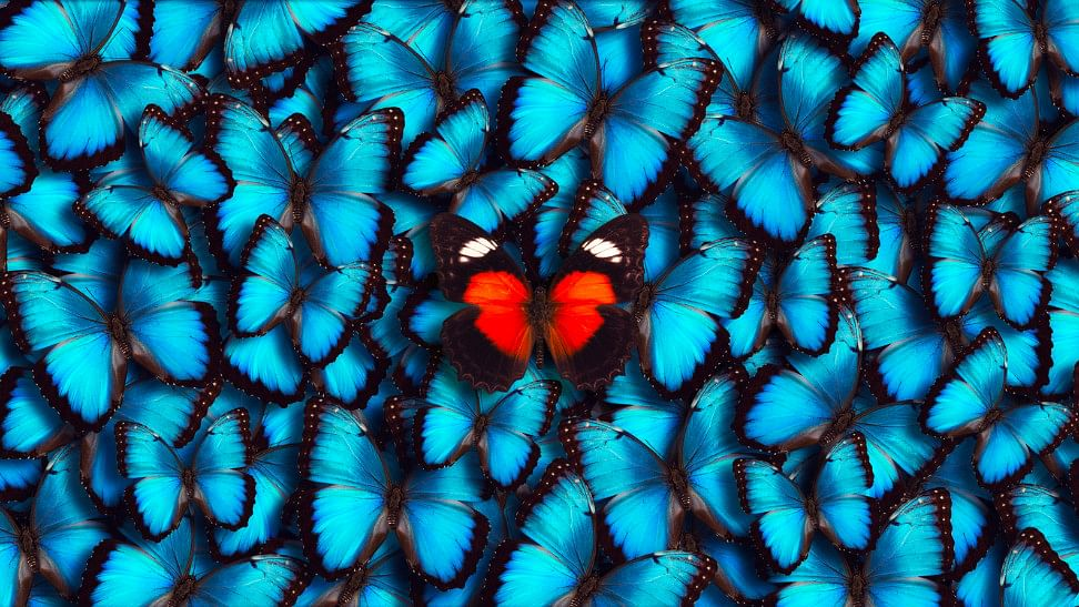 'I have a rare phobia of butterflies. It's called Lepidopterophobia.'