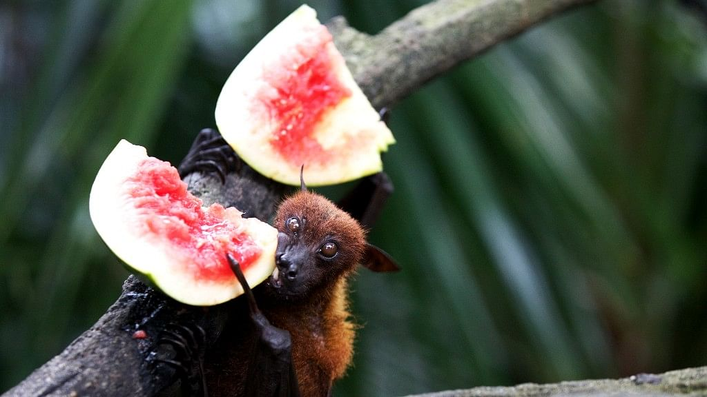 """<div class=""""paragraphs""""><p>First nipah virus outbreak was reported in Malaysia in 1998.</p></div>"""