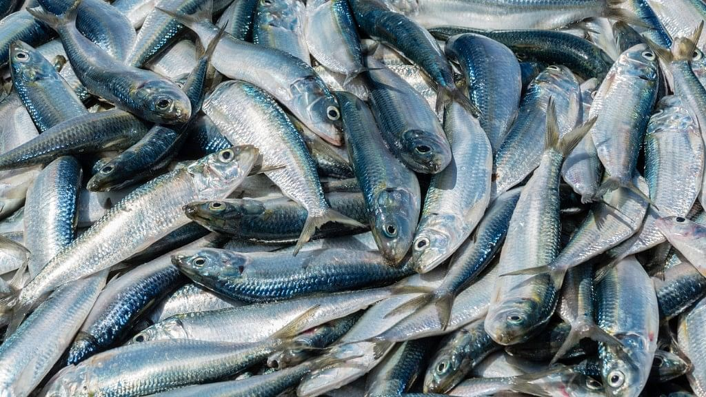 Fish Skin Cheaper, Less Painful in Treating Burns Than Bandages