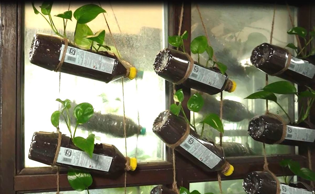 Low-cost solution using money plant.