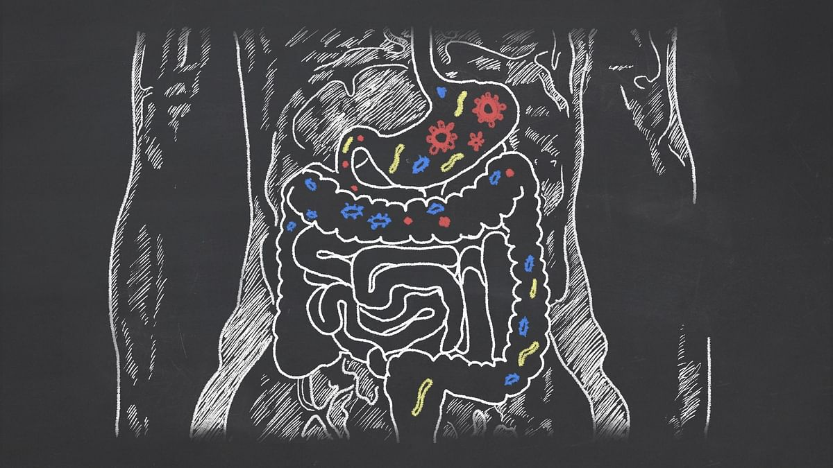 Gut bacteria can produce  beneficial molecules like propionate from dietery fibre that can can manage blood pressure.