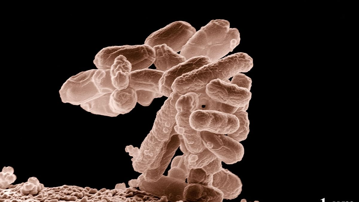 How Microbes Help Make a Perfect Cup of Coffee