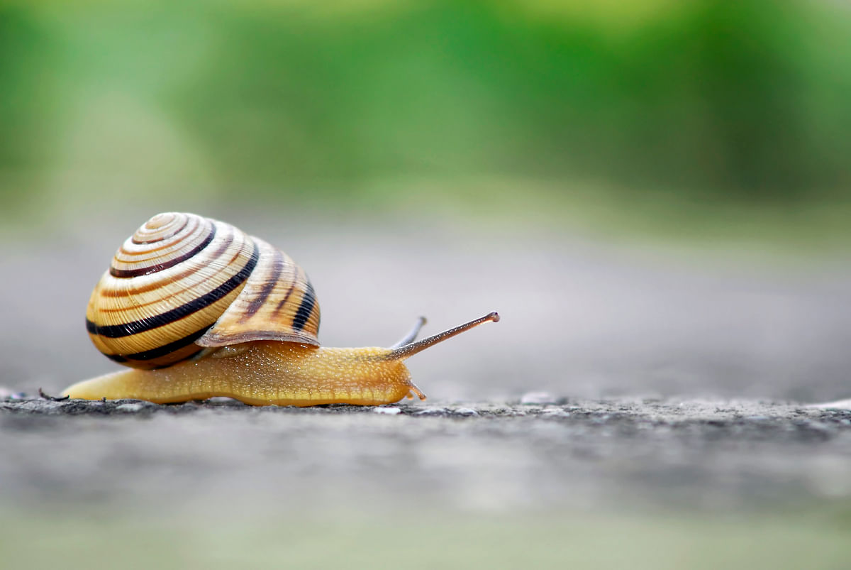 Insulin derived from the venom of marine cone snails may pave the way for a faster-acting drug to treat diabetes, scientists say.