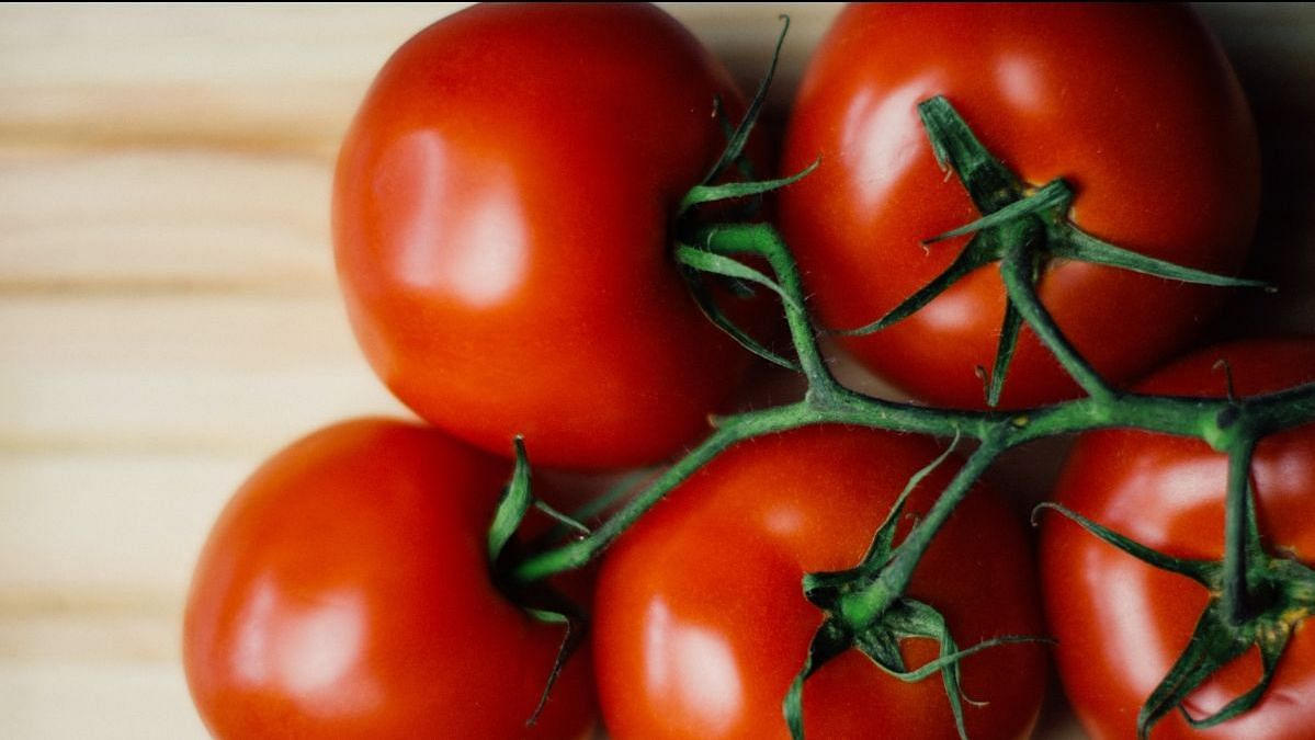 Tomatoes are high in fibre and rich in vitamin C. They also contain lectin.