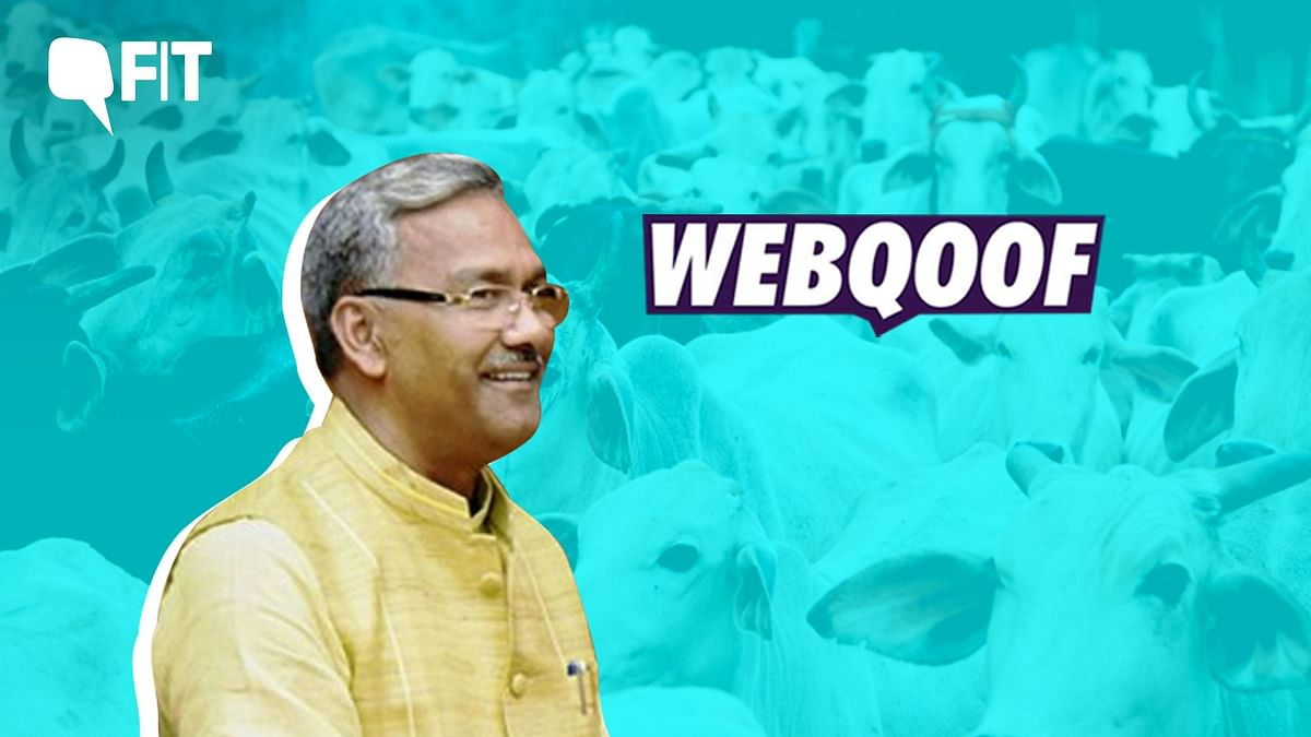 FIT WebQoof: No, Close Proximity to a Cow Cannot Cure Tuberculosis