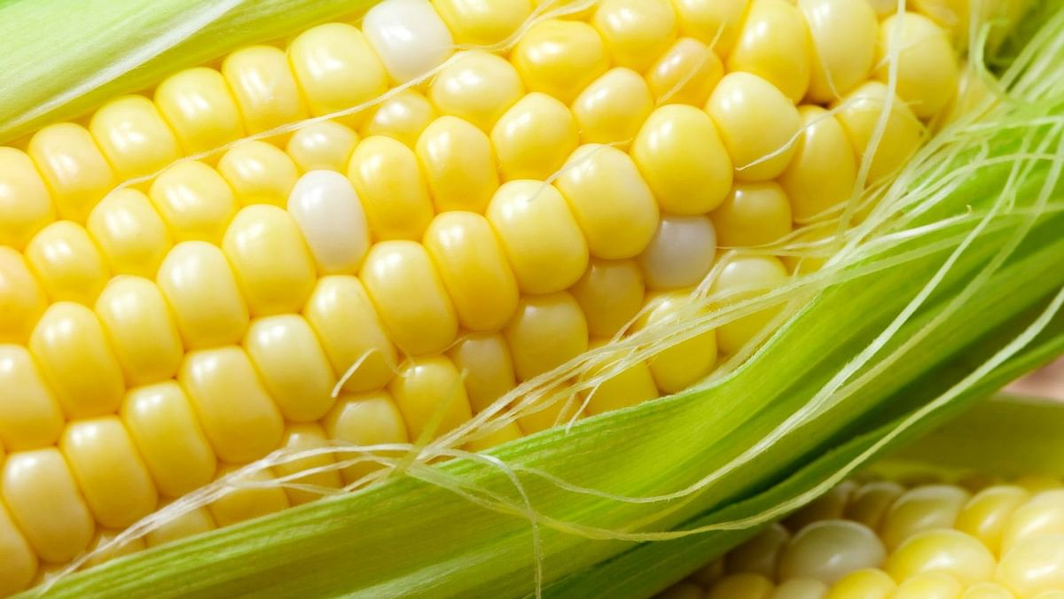 Corns are loaded with soluble and insoluble fibre.