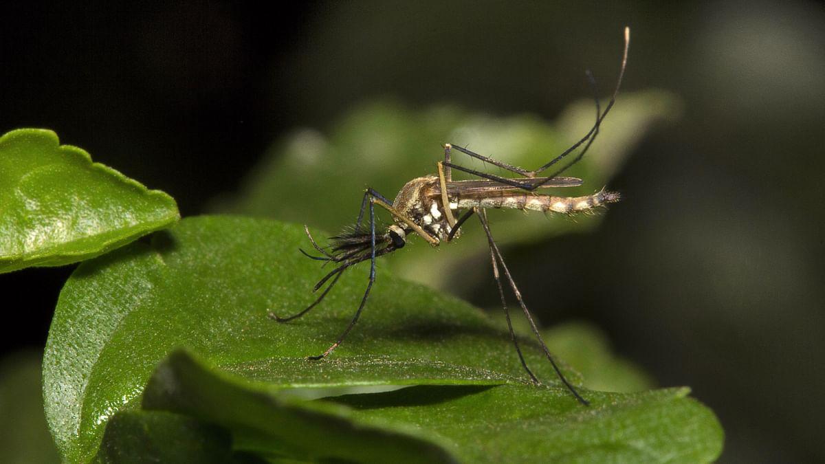 Go on War Footing to Curb Dengue: DMK Urges TN Govt
