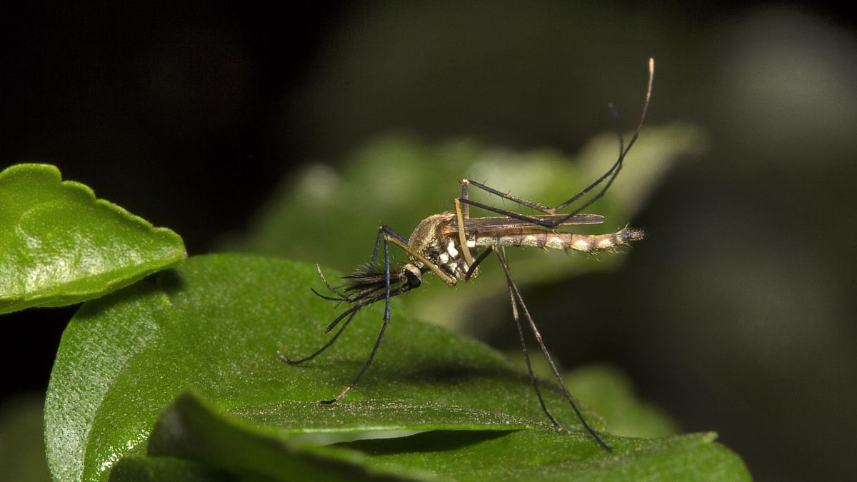 Doctors in Spain record the first ever case of dengue virus to be transmitted through sexual contact.