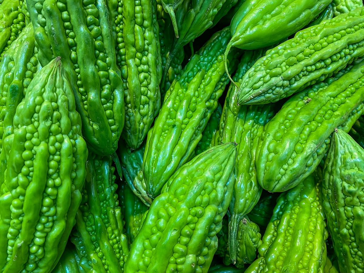 Bitter Gourd helps metabolise fat in the body