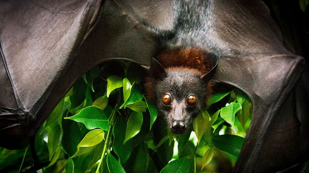 Study Reveals COVID-19 Virus Present in Bats for Decades
