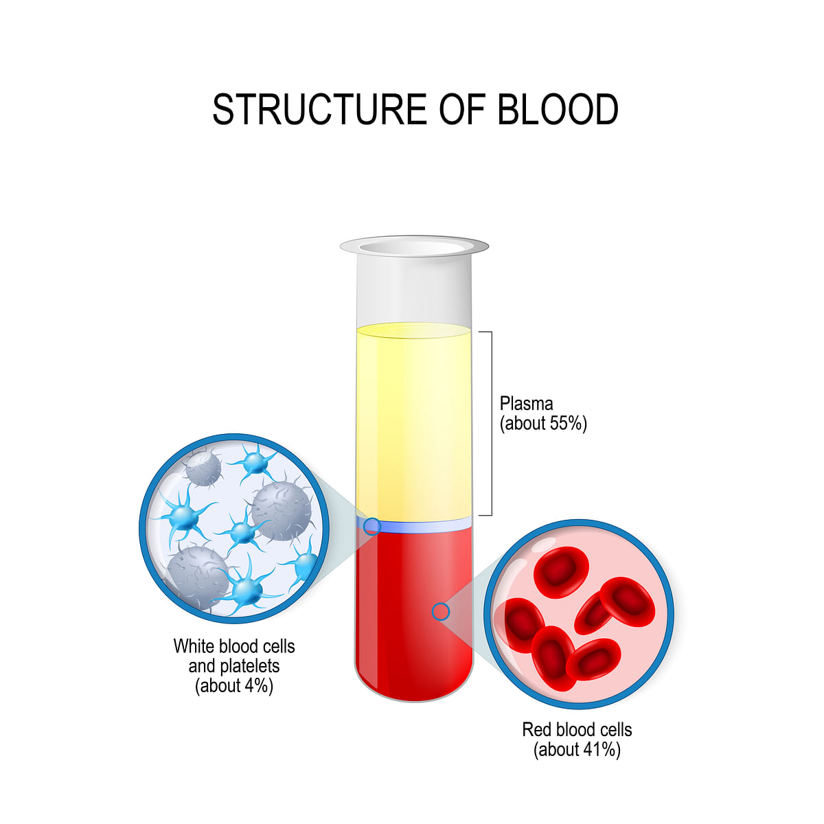 One-third of our blood is plasma.