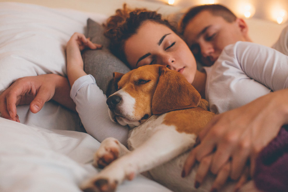 We love dogs. but we also need 'our' time.
