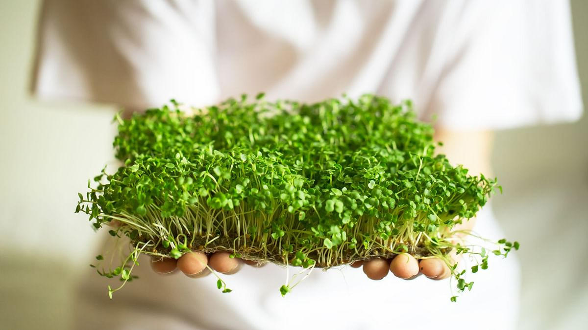 Are microgreens superfoods? How do you grow them?
