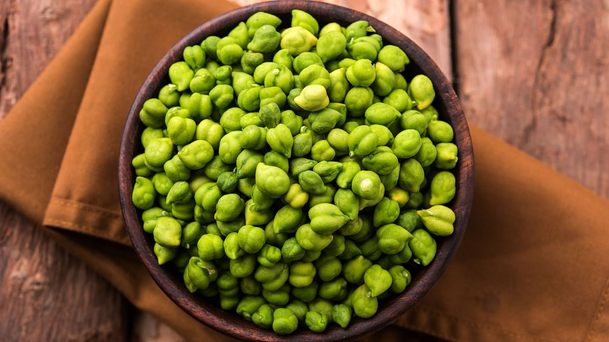 Choliya or green chickpea is eaten raw, roasted, boiled, or sautéed.
