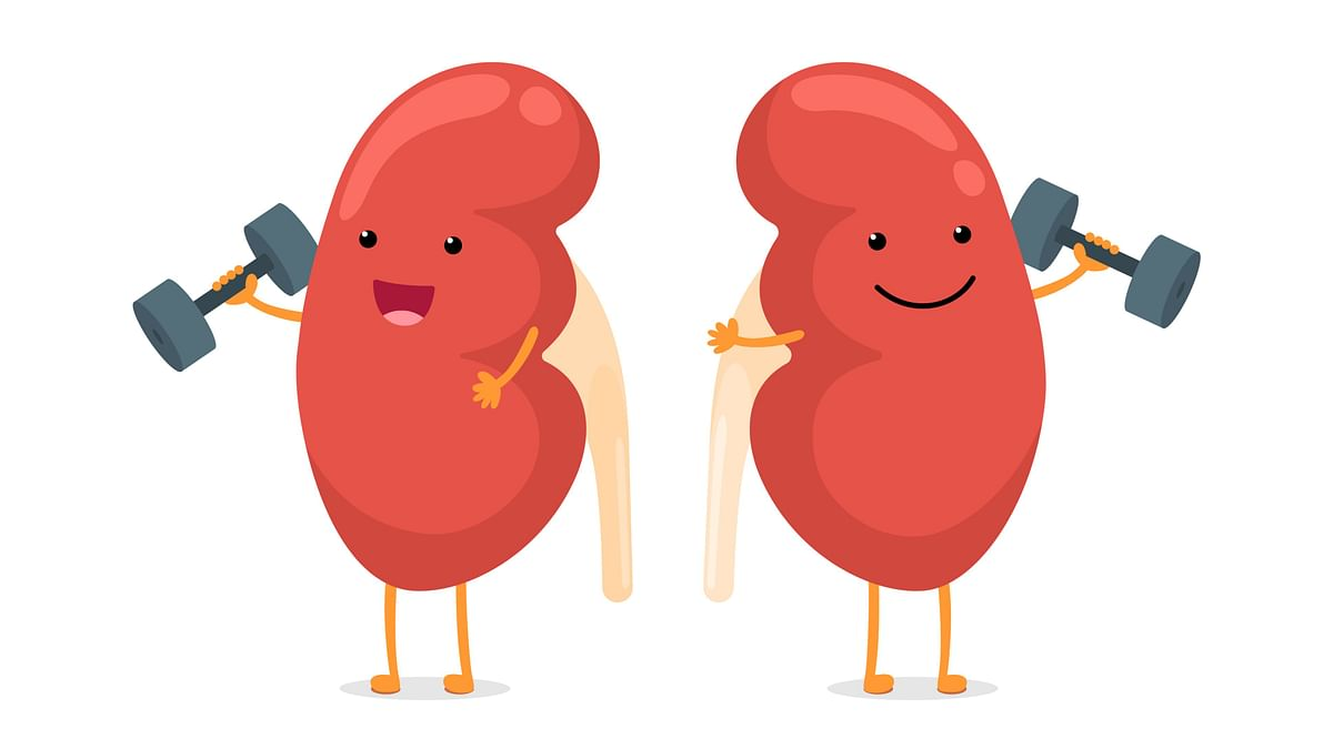 Fit Quiz: Are You Caring For Your Kidneys Right?