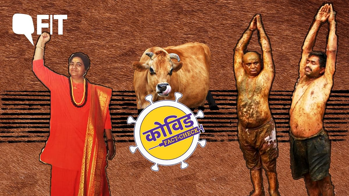 All Cow Dung & Urine 'Hacks' That Will Not Work Against COVID-19