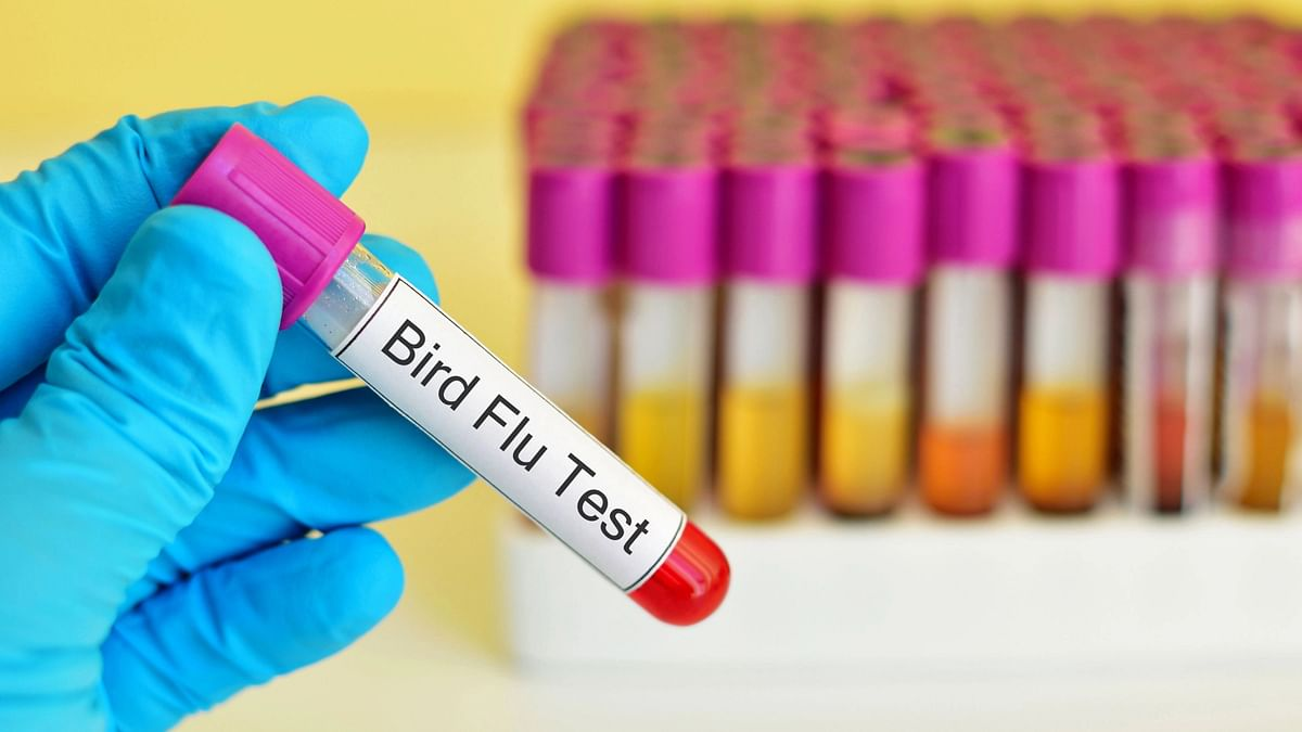 """<div class=""""paragraphs""""><p>Bird flu:&nbsp;इंसानों के लिए कितना खतरनाक हो सकता है Bird Flu वायरस?</p></div>"""