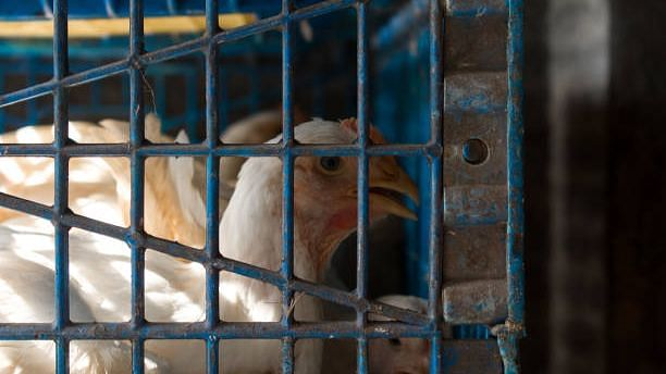 """<div class=""""paragraphs""""><p>According to WHO ,human cases of bird flu appear occasionally</p></div>"""