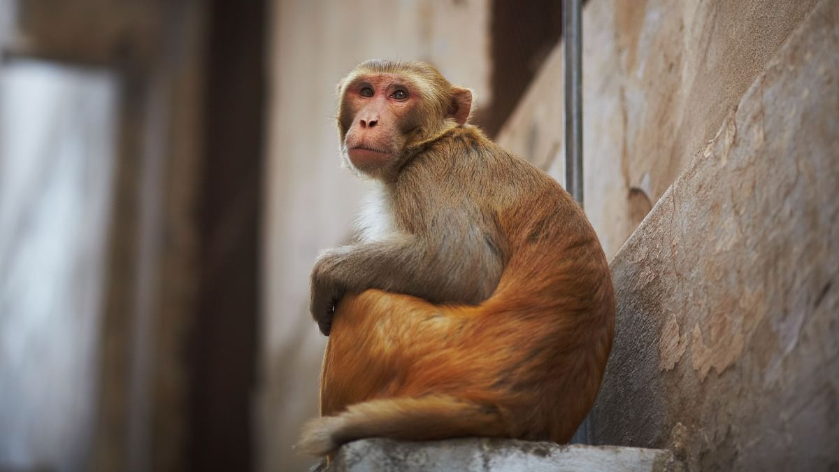 FAQ | What to Know About the Monkey B Virus