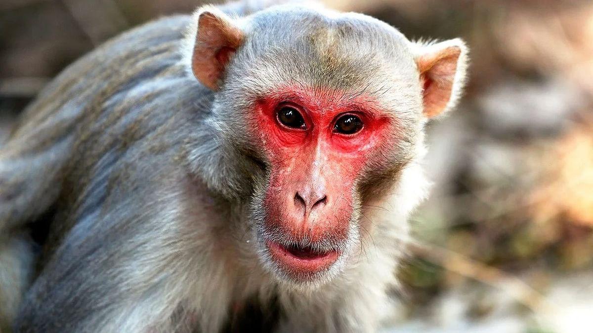 "<div class=""paragraphs""><p>China's First&nbsp;Monkey B Virus Human Infection And Death Case:&nbsp;चीन में मंकी बी वायरस से संक्रमित शख्स की मौत</p></div>"