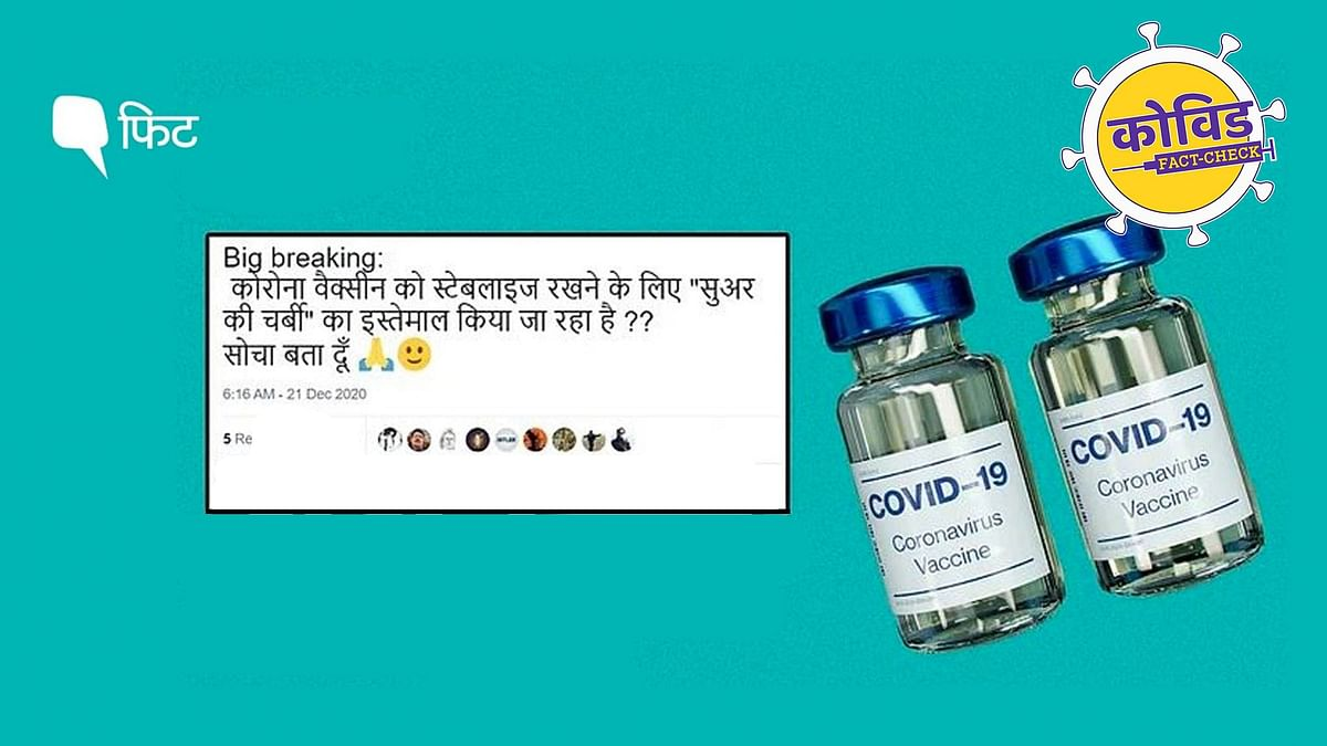"""<div class=""""paragraphs""""><p>Pig Fat in Covid-19 Vaccine Fact Check in Hindi</p></div>"""
