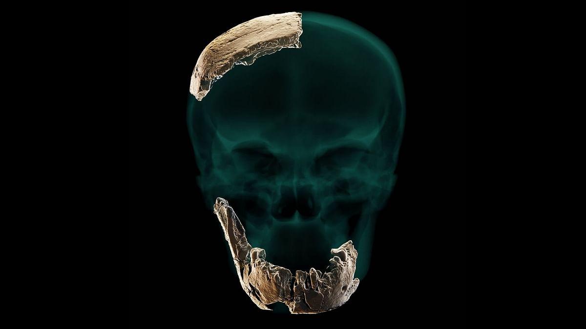 Nesher Ramla Homo': New Early Human Discovered in Israel